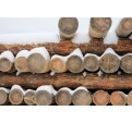 Prosept Огнебио Prof 1 комплексная защита древесины от возгорания и гниения